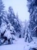 Tél a Bakonyban